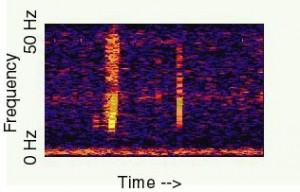 """Spettrogramma di """"Bloop"""" - NOAA"""