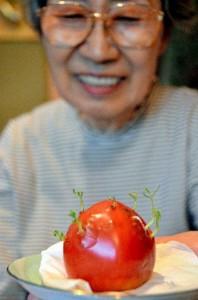 pomodoro germogliato