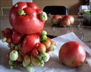 pomodoromutante