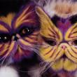 Gatti dipinti e origami erotici