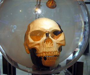 Sterkfontein_Piltdown_man2