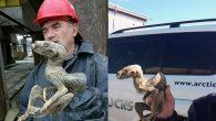 La mummia siberiana: non un dinosauro
