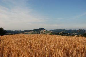 Monte delle Formiche, 2009 [Rambolola / CC BY-SA 3.0 via commons.wikimedia.org]