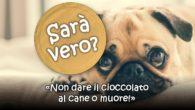 """""""Non dare il cioccolato al cane o muore""""! Sarà vero?"""