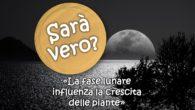 La fase lunare influenza la crescita delle piante. Sarà vero?